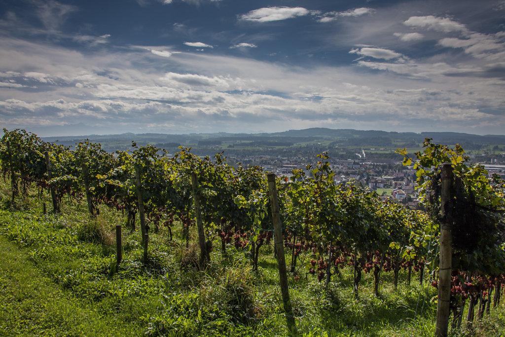Weingut-Burkhart-1492.jpg
