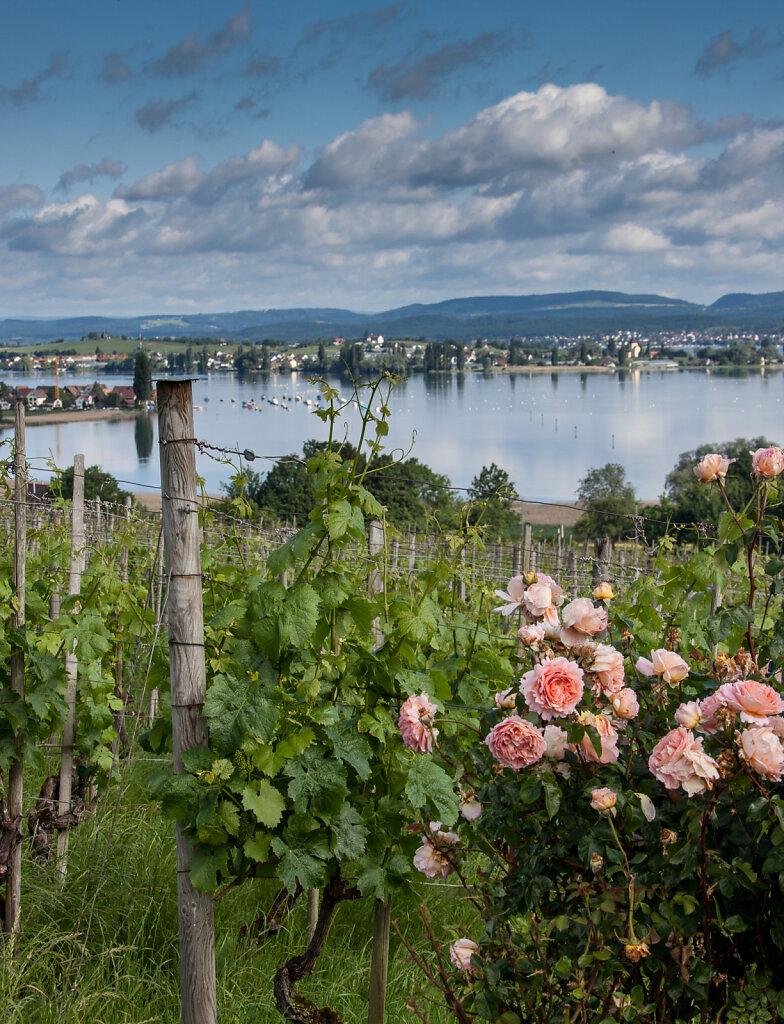 Fischbacher-Weine-8710.jpg
