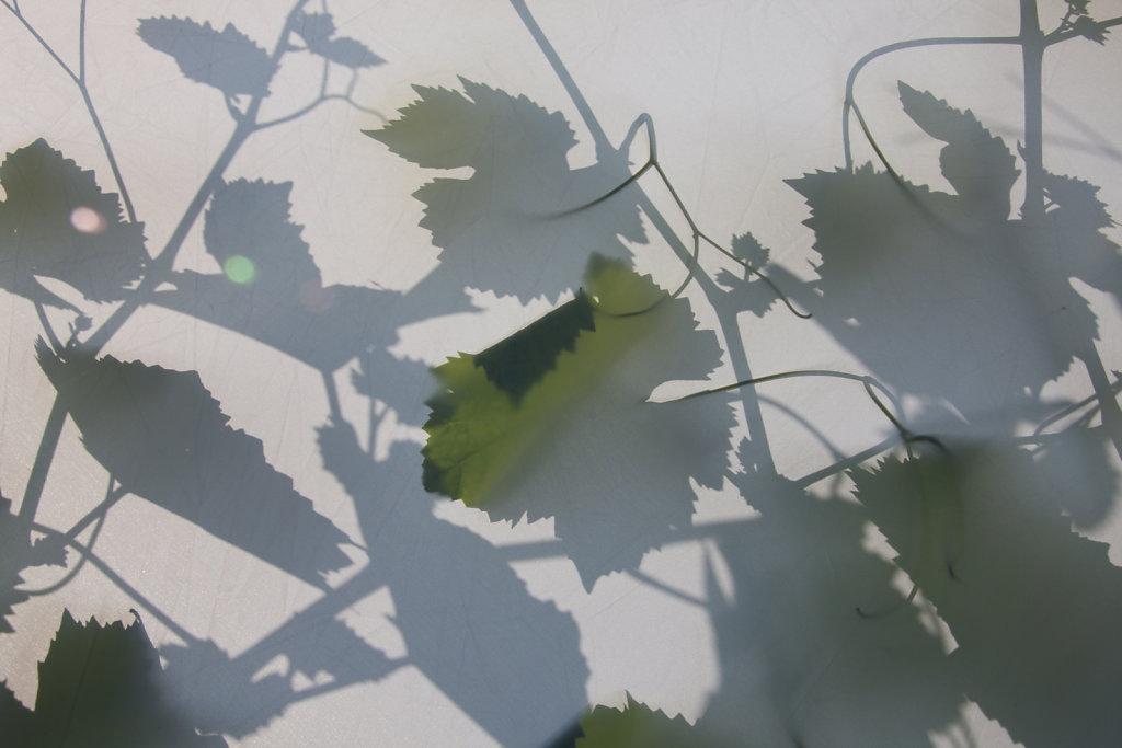 Weingut-Salathe-9647.jpg